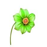明亮的五颜六色的大丽花花的例证 库存照片