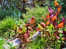 明亮的五颜六色的热带庭院 免版税图库摄影