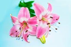 明亮的五颜六色的百合花 背景细部图花卉向量 库存照片