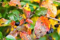 明亮的五颜六色的秋叶,宏指令 库存图片