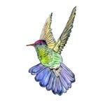 明亮的五颜六色的鸟蜂鸟 免版税库存照片