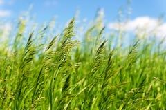 明亮的充满活力的绿草特写镜头 库存图片
