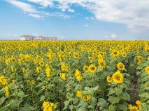 明亮的农村风景、向日葵、天空和房子 免版税库存照片