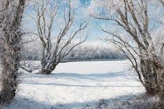 明亮的冬天森林和河有雪的,美好的狂放的风景与树和沼地 免版税库存图片