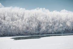 明亮的冬天森林和河有雪的,美好的狂放的风景与树和沼地 图库摄影