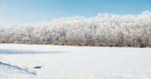 明亮的冬天森林和河有雪的,美好的狂放的风景与树和沼地 免版税库存照片