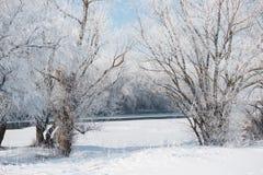明亮的冬天森林和河有雪的,美好的狂放的风景与树和沼地 库存图片