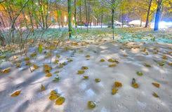 明亮的冬天秋天横向背景 库存照片