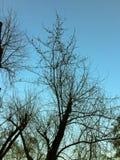 明亮的冬天蓝色清楚的天空 免版税库存照片