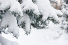 明亮的冬天风景 蓝色清楚的冷杉早晨天空多雪的结构树冬天 分支特写镜头 免版税图库摄影
