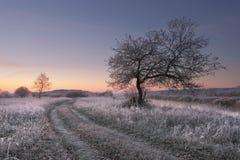 明亮的冬天黎明 库存照片
