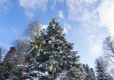 明亮的发光的圣诞树圣诞节玩具和装饰在生长在公园多雪的冷杉拉特 在背景受苦蓝色 库存图片