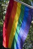 明亮的同性恋自豪日彩虹旗子绿叶 库存图片
