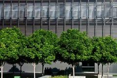 明亮的四个绿色结构树 库存照片