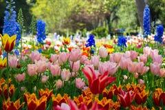 明亮的多彩多姿的庭院 免版税库存图片
