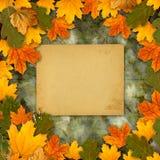 明亮的多彩多姿的秋叶 免版税库存照片