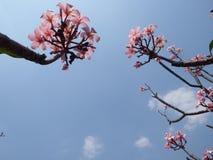 明亮的天空和美丽的花 库存图片