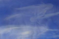 明亮的天空背景在水中反射鱼 - 相反概念 图库摄影