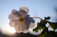 明亮的天竺葵装饰围场 图库摄影