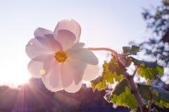 明亮的天竺葵装饰围场 库存照片