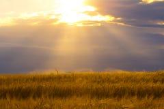 明亮的太阳照亮的麦田和云彩 库存照片