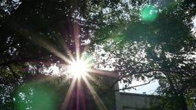 明亮的太阳通过树叶子发光在城市的街道 慢的行动 股票录像