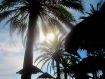 明亮的太阳通过棕榈叶状体 库存照片