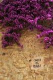 从明亮的开花的九重葛的生动的颜色 图库摄影
