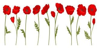 明亮的开花的红色鸦片花和叶子,花卉设计元素在a的传染媒介例证的汇集与词根的 皇族释放例证