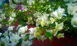 明亮的开花的花 免版税库存照片