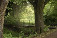 明亮的日落在一个绿色公园在夏天 免版税库存图片