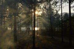 明亮的日落 库存照片