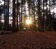 明亮的旭日形首饰通过秋天秋天森林史丹利公园 免版税图库摄影
