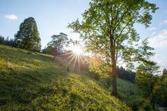 明亮的星期日 太阳光芒本质上 carpathians 山 星期日 库存照片