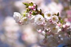 明亮的春天心情 免版税库存照片