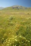 明亮的春天黄色在卡里索国家历史文物,美国Departmen的山附近开花,沙漠金子和花菱草 图库摄影