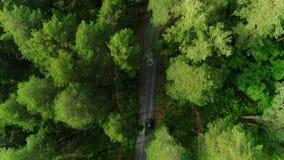 明亮的林木上面由阳光和黑暗的树荫点燃了与孤立汽车 股票视频