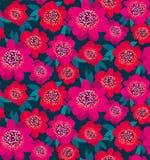 明亮的桃红色和红色装饰山茶花花 免版税库存照片