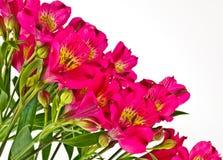 明亮的桃红色德国锥脚形酒杯花束  库存照片