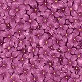 明亮的桃红色淡紫色花无缝的传染媒介春天纹理  免版税库存照片
