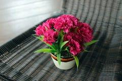 明亮的桃红色花束花 免版税库存图片