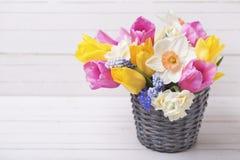 明亮的桃红色,黄色和白色春天郁金香和黄水仙流动 免版税图库摄影