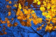 明亮的桔子留下蓝色晚上天空 图库摄影