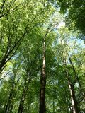 明亮的森林 库存照片