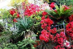 明亮的植物和红色花 免版税图库摄影