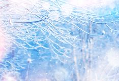 明亮的横向冬天 库存照片