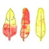 明亮的橙色和黄色手拉的水彩用羽毛装饰与墨水 免版税库存照片