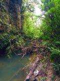 明亮的浓雾森林高例证密林层质量河日落超级稀薄的唯一水 免版税库存图片