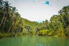 明亮的浓雾森林高例证密林层质量河日落超级稀薄的唯一水 库存图片