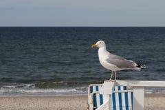 明亮的海鸥坐与波罗的海的扶手栏杆的 免版税库存照片